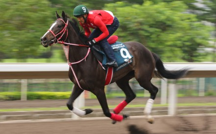 Lys Gracieux gallops at Sha Tin ahead of one of her Hong Kong runs. Photo: Kenneth Chan