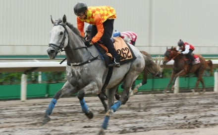 Pingwu Spark wins a barrier trial at Sha Tin earlier this month. Photos: Kenneth Chan