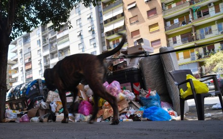 Rome is struggling with a garbage emergency aggravated by the summer heat. Photo: AFP