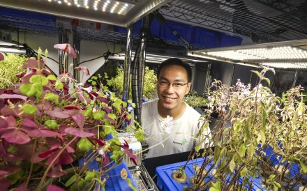 Farmacy grows vegetables and herbs hydroponically in Causeway Bay, and is trialling mobile farms. Co-founder Raymond Mak talks about cutting Hong Kong's carbon footprint and delivering fresh produce. Photo: Jonathan Wong