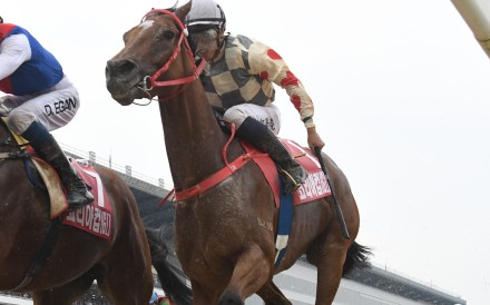 Glorious Artist finishes strongly in the Korea Cup at Seoul on Sunday. Photos: HKJC