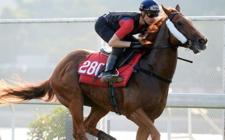 Blake Shinn gallops Styling City at Sha Tin on Thursday morning. Photos: Kenneth Chan