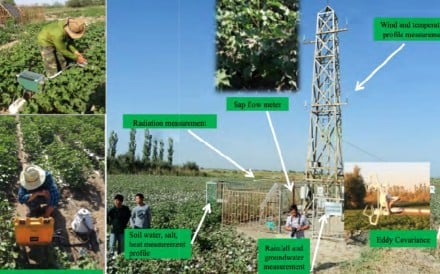 One of the team's experimental stations at a cotton farm in Xinier, in the far western Xinjiang region. Photo: ICID
