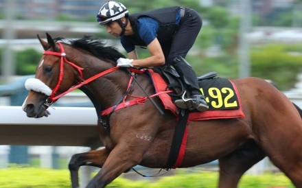 Playa del Puente gallops on the Sha Tin all-weather surface this season. Photos: Kenneth Chan