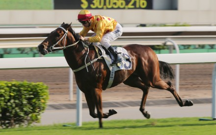 Gold Mount wins at Sha Tin. Photos: Kenneth Chan