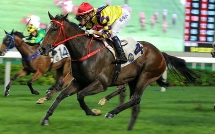 Champion's Way crosses the line for one of his six wins last season. Photos: Kenneth Chan