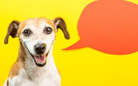 Can you really talk to your furry friends? Animal communication has been around as long as animals have existed.