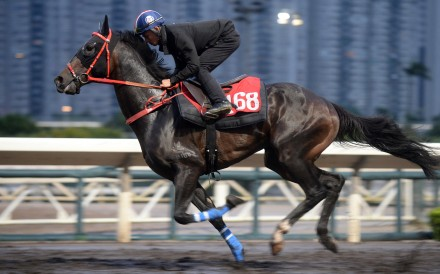 Voyage King at Hong Kong's Sha Tin Racecourse on May 30. The horse was euthanised after breaking its leg during a race at the Happy Valley Racecourse on November 20. Photo: Kenneth Chan