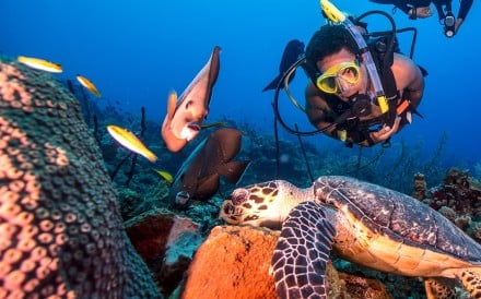 A diver gets up close with a sea turtle. Photo: Padi