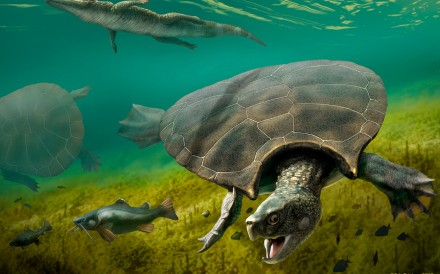An illustration depicts the extinct freshwater turtle Stupendemys geographicus, which lived in lakes and rivers in northern South America during the Miocene epoch. Image: J.A. Chirinos via Reuters