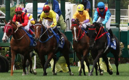 Horses take off at Sha Tin. Photo: Kenneth Chan
