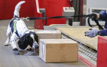 A sniffer dog goes to work on parcels arriving at Hong Kong International Airport. Photo: K.Y. Cheng