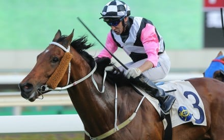 Neil Callan boots home a winner at Sha Tin on the weekend. Photos: Kenneth Chan