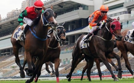 Horses thunder down the Sha Tin straight on Sunday. Photo: Kenneth Chan