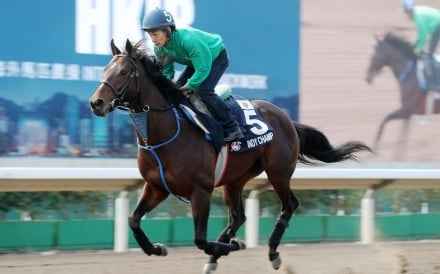 Indy Champ works at Sha Tin ahead of his run in December's Hong Kong Mile. Photos: Kenneth Chan