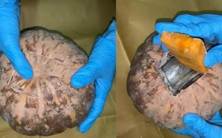 Drugs including heroin and Ecstasy tablets were found hidden in two pumpkins during a search at a Singaporean's home. Photo: Central Narcotics Bureau /Today Online