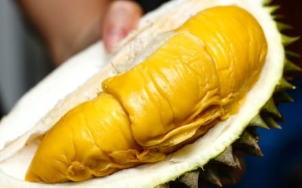 Musang King durian is also known as 'Mao Shan Wang' or 'Sleeping Cat' after the shape of the freshly opened fruit. Photo: Handout