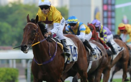 Not Usual Talent wins at Sha Tin. Photos: Kenneth Chan