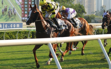 Stronger romps home at Sha Tin. Photos: Kenneth Chan