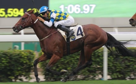 Computer Patch is looking to win at Group Two level for the first time in the Jockey Club Sprint. Photos: Kenneth Chan