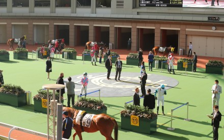 Horses parade in an empty Sha Tin paddock ahead of the races. Photos: Kenneth Chan