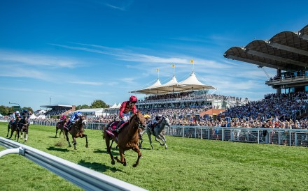 Horses compete at Glorious Goodwood. Photo: Sarah Farnsworth