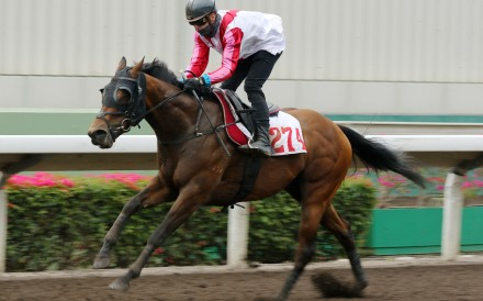 Tony Piccone trials Congratulation at Sha Tin on Tuesday morning. Photos: Kenneth Chan
