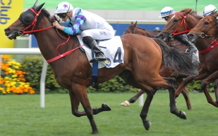 Can Zone D do the right thing by Triple Trio players and continue his consistent run at Sha Tin on Sunday? Photo: Kenneth Chan