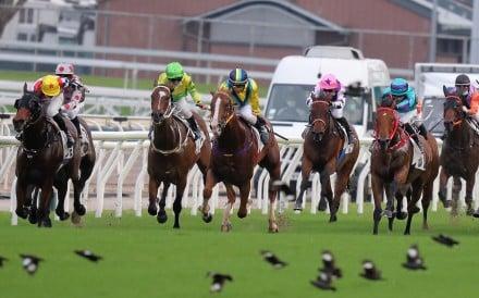 Horses race on a good track late on Sunday's Sha Tin card. Photos: Kenneth Chan