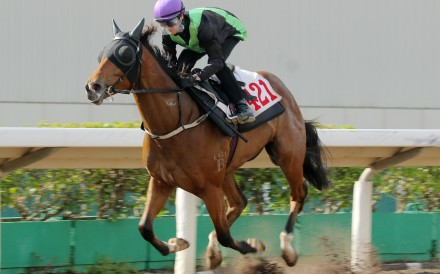 Nervous Witness wins a trial at Sha Tin on Tuesday morning. Photos: Kenneth Chan