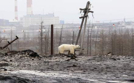 A polar bear which appeared to be starving was spotted in the Russian industrial city of Norilsk on June 18, 2019....