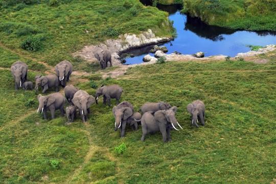 Ivory trade in Hong Kong and China | South China Morning Post