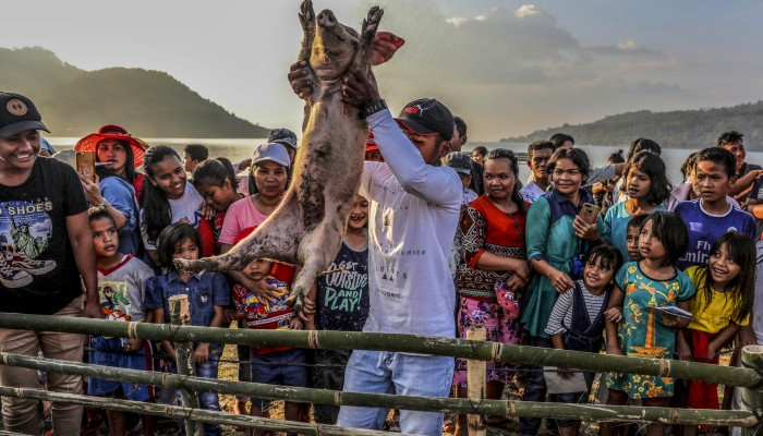 In Pictures: Lake Toba Pig and Pork Festival in Indonesia