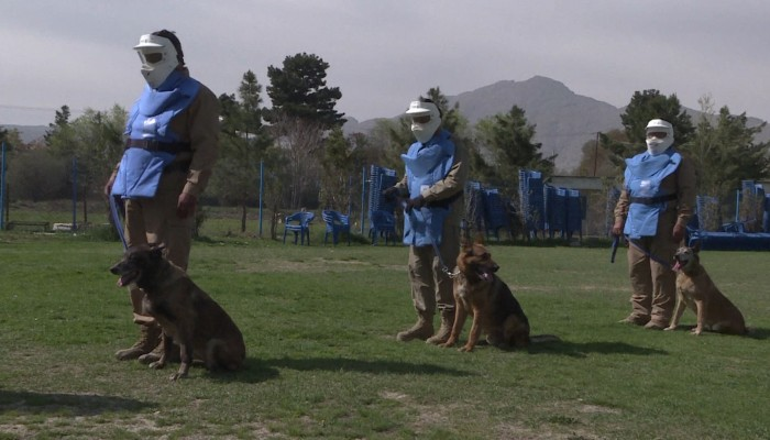 Sniffer dogs find explosives in Kabul