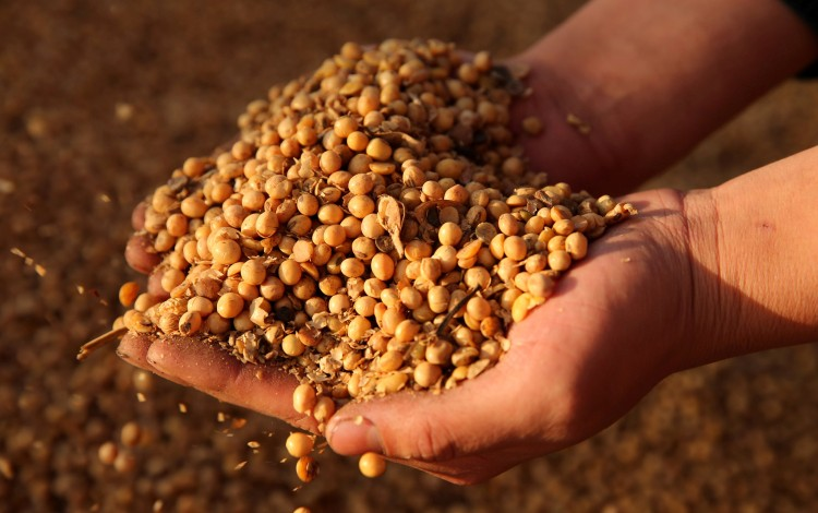 China's US Soybean And Pork Imports Down 55.3 Per Cent Due To Trade War, African Swine Fever
