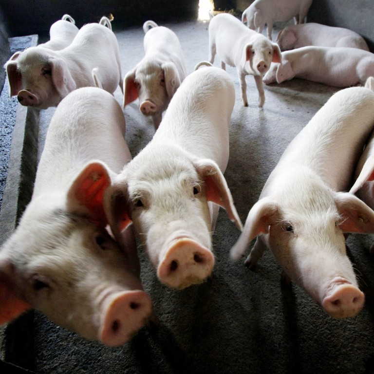 Muyuan Foods is betting on an increase in live hog prices this year. Photo: AP Photo