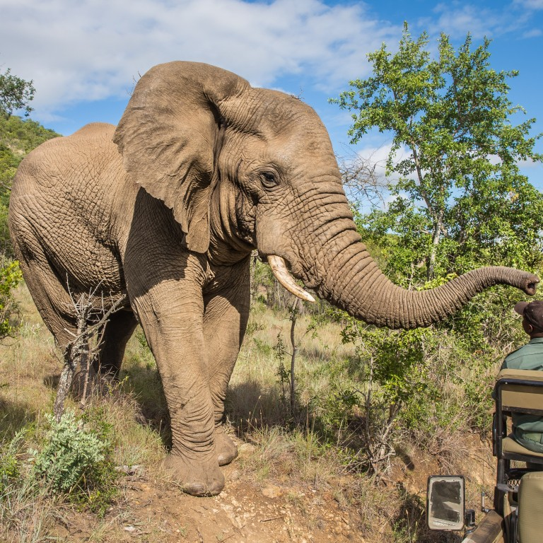 Suspected rhino poacher is killed by an elephant and devoured by