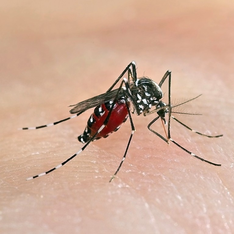 Chinese Scientists U2019 New Technique To Wipe Out Mosquito Populations May Provide Vital New Weapon