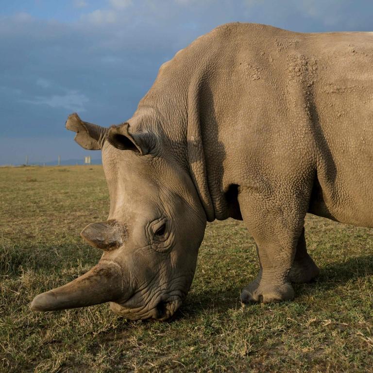 Customs seizes HK$16 5 million record haul of rhino horns in