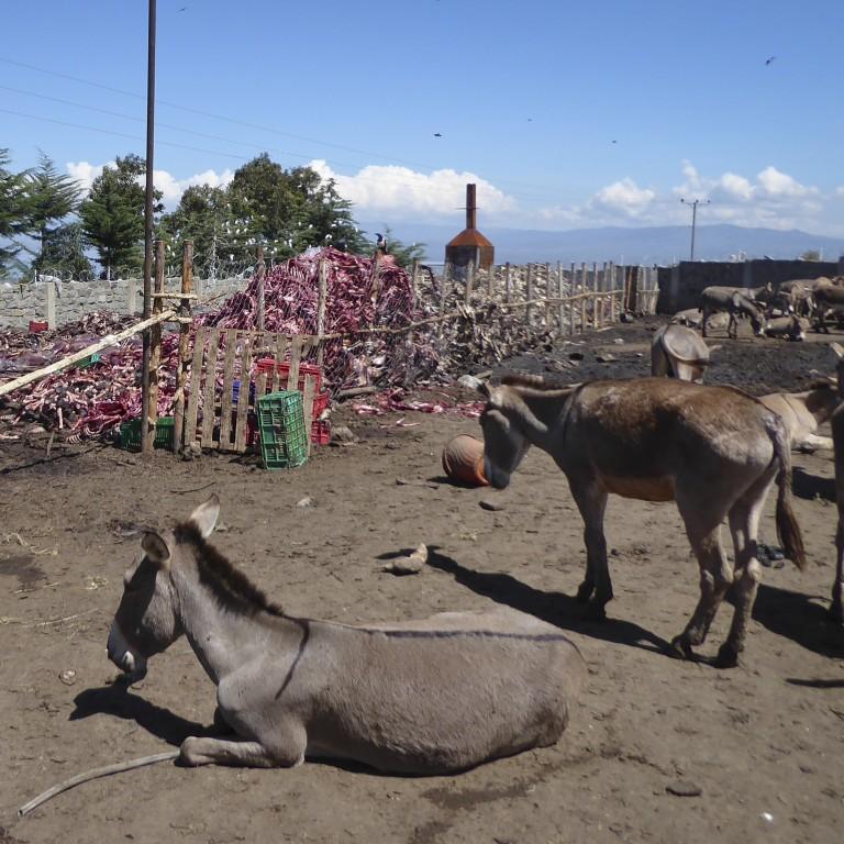 Astounding How Chinas Demand For Donkey Skins Risks Devastating Ibusinesslaw Wood Chair Design Ideas Ibusinesslaworg
