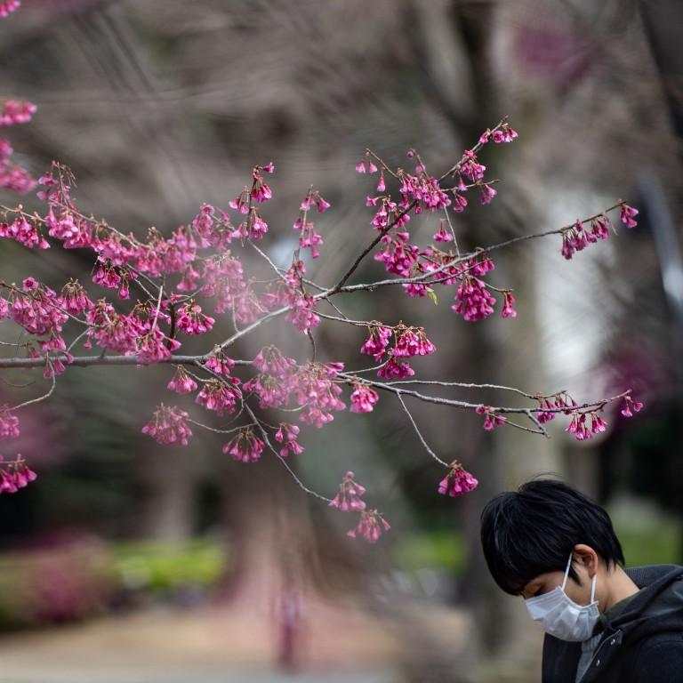 Coronavirus Japan S Cherry Blossom Season Has Come Early Too
