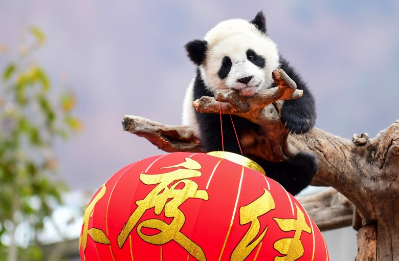 3 Do's and Don'ts for Lunar New Year