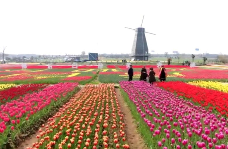 The tulips and windmills of… China?