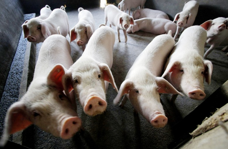 The world is running out of pork to feed China