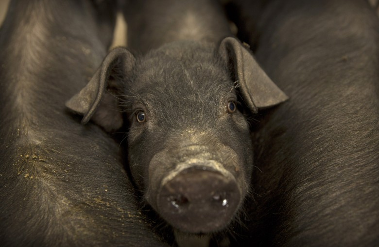 World's biggest pork eaters are exploring other options
