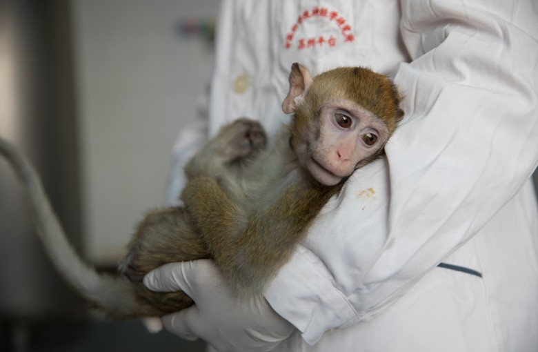 US tariffs on monkeys could hurt America's biomedical research