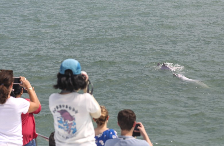 Hong Kong's dolphin tourism takes hit amid unrest