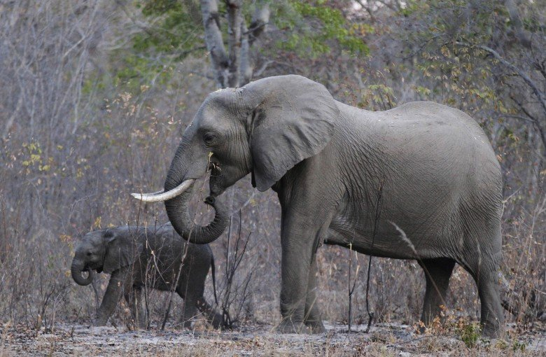 Chinese animal rights groups outraged about arrival of baby elephants