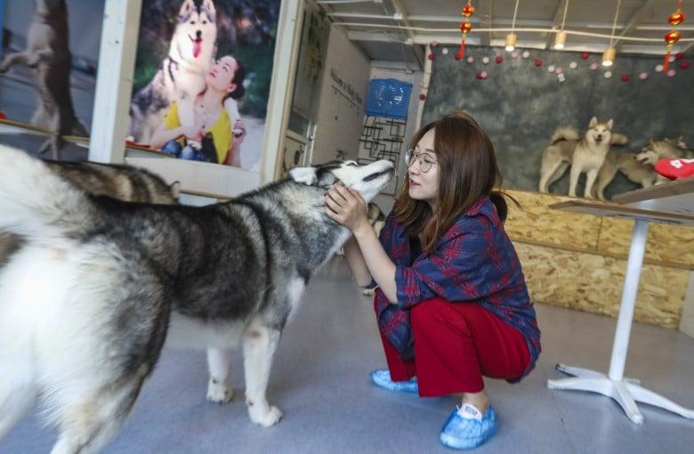 Pet food maker behind Pedigree, Whiskas says it's betting big on China