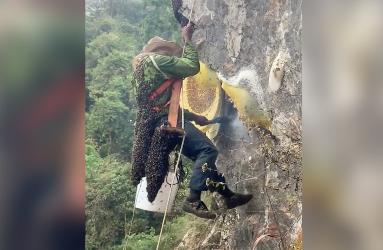 Villagers risk lives to collect cliff honey